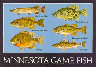 MN-Game-Fish